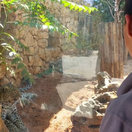 """טיול של שכנות טובה לגן החיות התנכ""""י"""